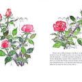 garden09
