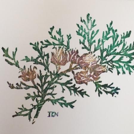 Cypress card
