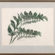 "framed print ""Solomon's Seal"" by Ilse Buchert Nesbitt"