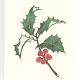 Holly greeting card, woodcut by Ilse Buchert Nesbitt
